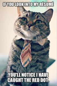 Job App Cat: If you look into my resume, you'll see I've caught the red dot.